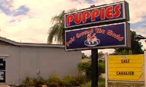 New push to ban pet stores [Video]