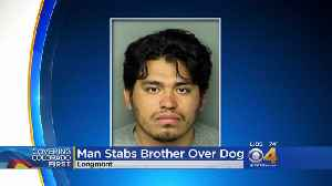 Brother Kills Brother In Fight Over Dog [Video]