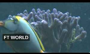 Coral reef tells story of sea change | FT World [Video]