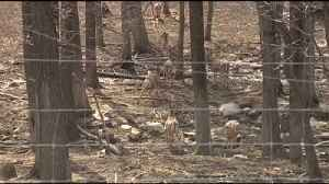 VIDEO:Game Commission says dead deer in Berks, Chester counties tested positive for EHD [Video]