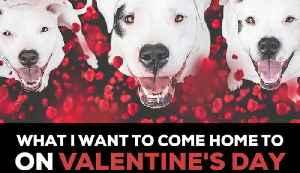 Dogs Are the Best Valentines [Video]