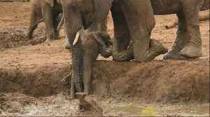 Elephants rush over to help youngster out of muddy bank [Video]