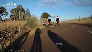 Suddenly, kangaroo: cyclist gets struck by animal in Australia [Video]