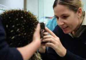 Unlucky Echidna is World's First to Be Allergic to Ants, Her Main Food Group [Video]