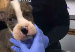 Puppies Rescued After Being Found With Rubber Bands Forcing Mouths Shut [Video]