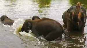 Baby elephants & mothers dive underwater while crossing river [Video]