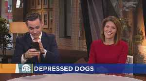 Are Smartphones Making Dogs Depressed? [Video]