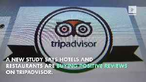 Investigation Says One in Three Reviews on TripAdvisor Are Fake [Video]