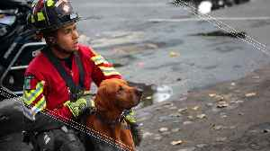 These Pups are Mexico's National Heroes [Video]