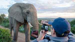 Norwegian tourist gets up close with elephant in South Africa [Video]