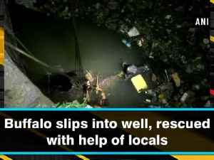 Buffalo slips into well, rescued with help of locals [Video]