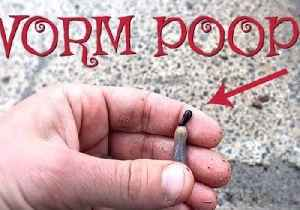 Dad Shows Kids How an Earthworm Poops [Video]