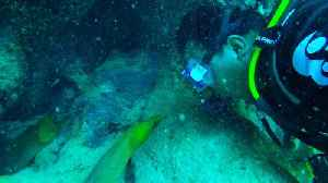 Diver has extreme close encounter with giant moray eels [Video]