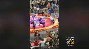 Police: Handler Dropping Instrument Spooked Camel In Sept. Circus Incident [Video]