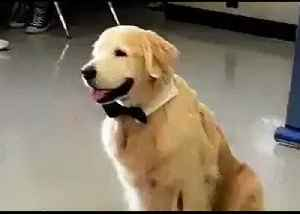 Assistance Dog in Marjory Stoneman Douglas High School Poses for School Yearbook Photo [Video]