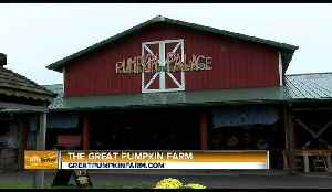 AM Buffalo on the Road - Part 5 Pumpink Palace [Video]