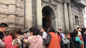 All creatures great and small get blessed by priest in Quito [Video]