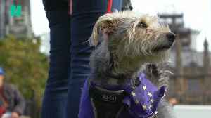 Dogs March Against Brexit [Video]
