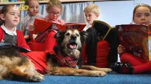 This School-Attending Dog Is Man's Best... Reading Tutor? [Video]