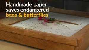 Polish traditional handmade paper feeds endangered bees [Video]