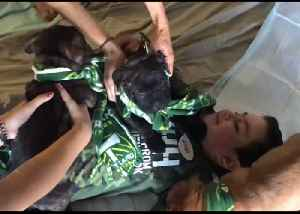 Puppy Love as Portland Team Surprises Boy Battling Brain Cancer [Video]