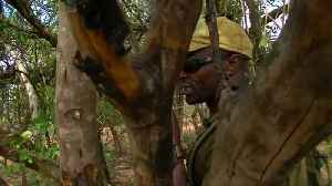 Conservationists in Tanzania use tech platform to protect endangered species [Video]