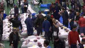 World's largest fish market re-opens in Tokyo [Video]