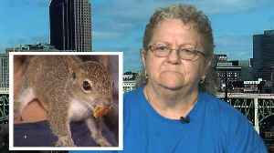 Woman Kicked Off Plane Over Emotional Support Squirrel Plans to Fight Airline [Video]