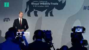 Prince William Makes Heartfelt Plea Against Animal Extinction [Video]