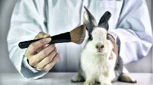 Unilever Announces Support of a Global Ban on Animal-Tested Cosmetics [Video]