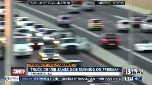 Truck driver saves dog on freeway [Video]