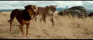 The First Trailer For 'A Dog's Way Home' [Video]