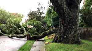 Storm downs huge branch from 300-year-old oak tree on Long Island [Video]