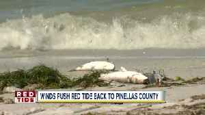 News video: Hurricane Michael winds push Red Tide back to Pinellas County