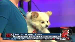 23ABC's Pet of the Week: Happy [Video]