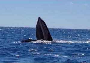 Boaters Amazed at Sight of Whale With Mouth Wide Open [Video]