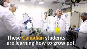 Canadian students go to college to learn how to grow pot [Video]