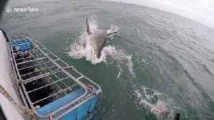 Cameraman has near miss with huge great white shark [Video]