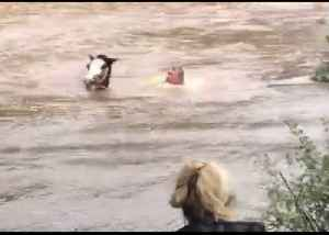 Farmer Swims Through Flooded Field to Save Stranded Horses [Video]