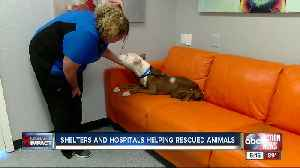 Local animal shelters are looking for people to adopt or foster pets rescued from Hurricane Michael [Video]