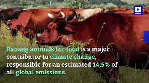 Latest Plan to Slow Climate Change: Eat Less Meat [Video]