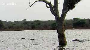 Hippo drenches heron using it as perch [Video]