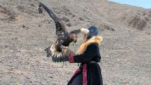 How did an Oklahoma woman start hunting with eagles in Mongolia? [Video]