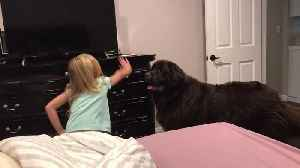 Mom documents hilarious bedtime routine with huge Newfoundland [Video]