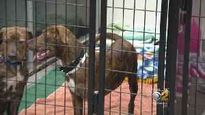 PAWS Chicago Rescues 35 Dogs And Cats From Florida After Hurricane Michael [Video]