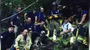 Firefighters Come to the Rescue of Dog Trapped in Cave [Video]