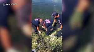 Firefighters rescue abandoned dog after the owners left it for dead [Video]