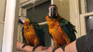 Macaw thoroughly entertained by his mirror reflection [Video]