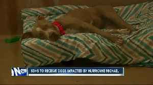 San Diego Humane Society receiving dogs impacted by Hurricane Michael [Video]