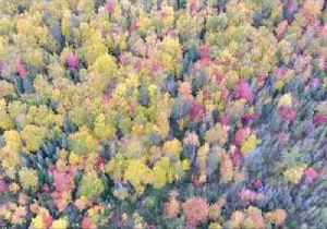 Drone Footage Captures Peak Autumn Foliage in Newfoundland [Video]